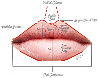 Lip symmetry