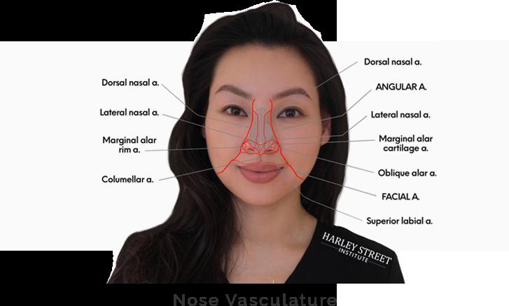 Nose Vasculature